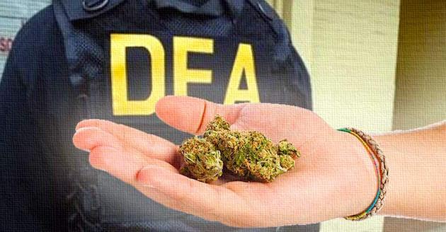DEA-Cannabis.jpg